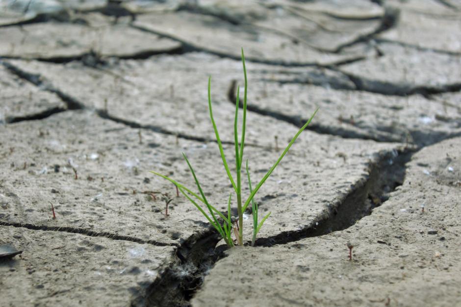 Problem niedoboru wody coraz większy. Suszy można przeciwdziałać