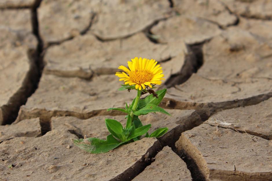 Naukowcy ostrzegają przed suszą. Możliwa niżówka w ośmiu województwach