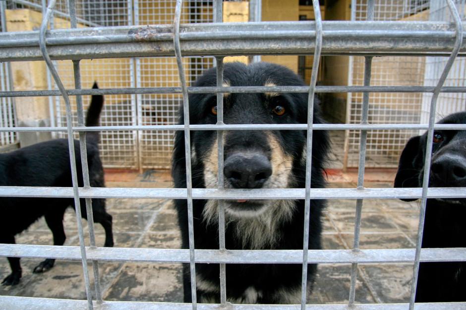 Schroniska dla zwierząt zamknięte, adopcje w ograniczonym zakresie