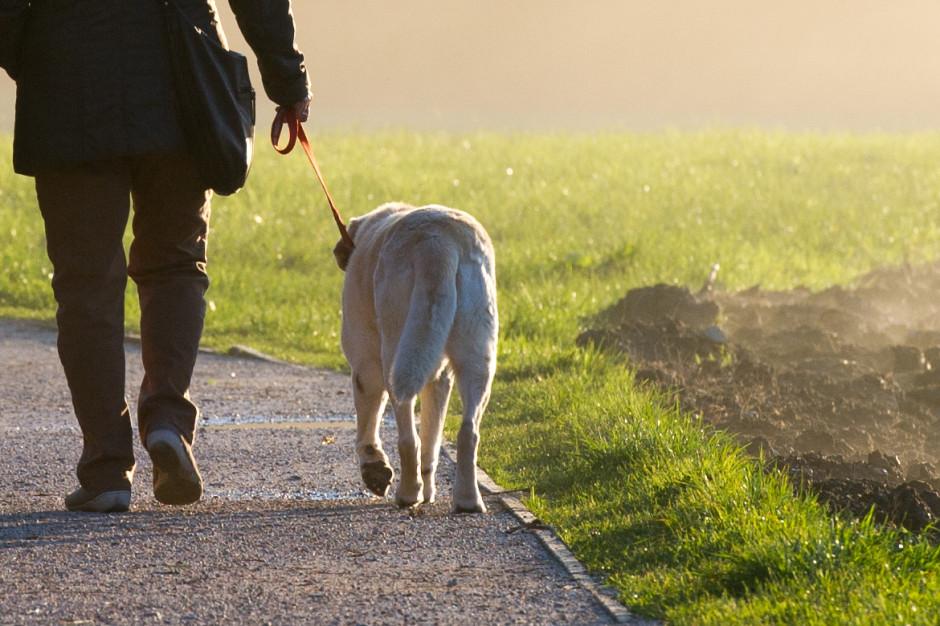 Straż miejska przypomina o obowiązku szczepienia psów przeciwko wściekliźnie