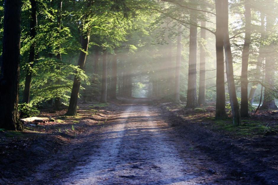 Rekomendacja ministra środowiska: Do lasu bez maseczki