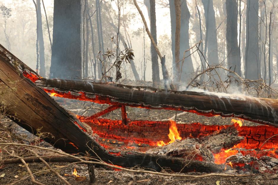 Zagrożenie pożarowe we wszystkich polskich lasach