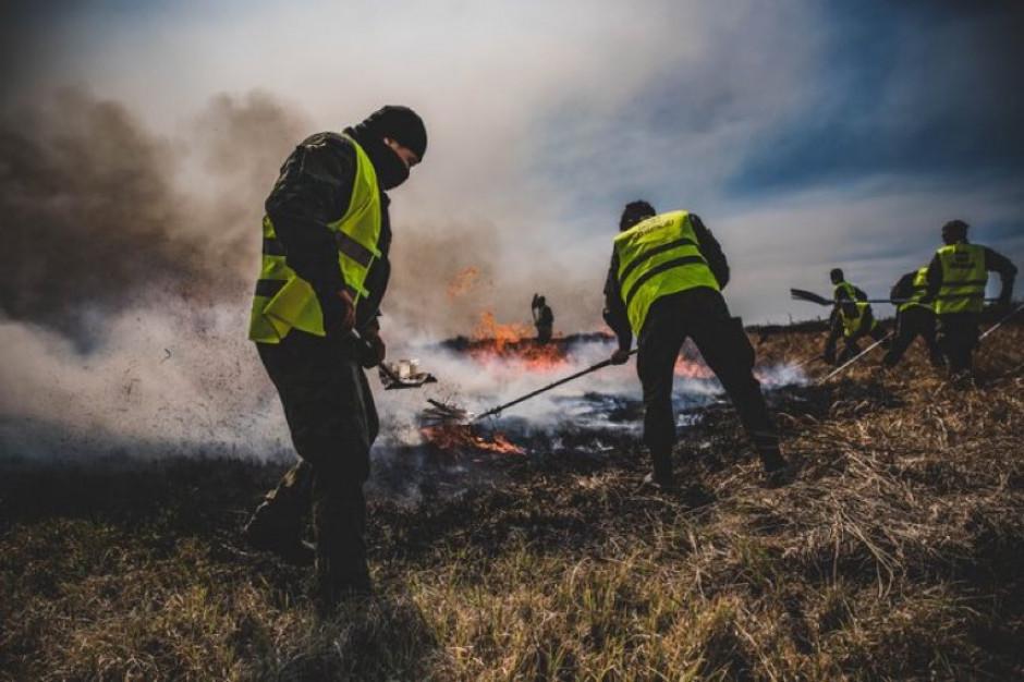 Naukowiec: pożar Biebrzańskiego Parku Narodowego to prawdziwy kataklizm