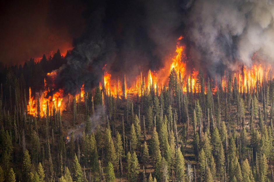 Płoną lasy. Ponad sto pożarów w ciągu doby