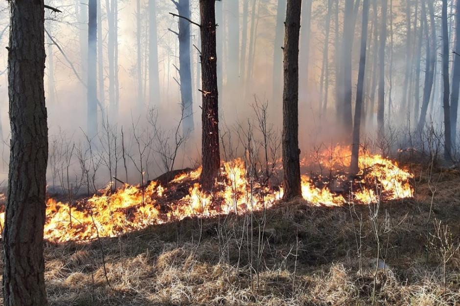 Mazowsze: W poniedziałek doszło do 40 pożarów lasów i 70 pożarów traw