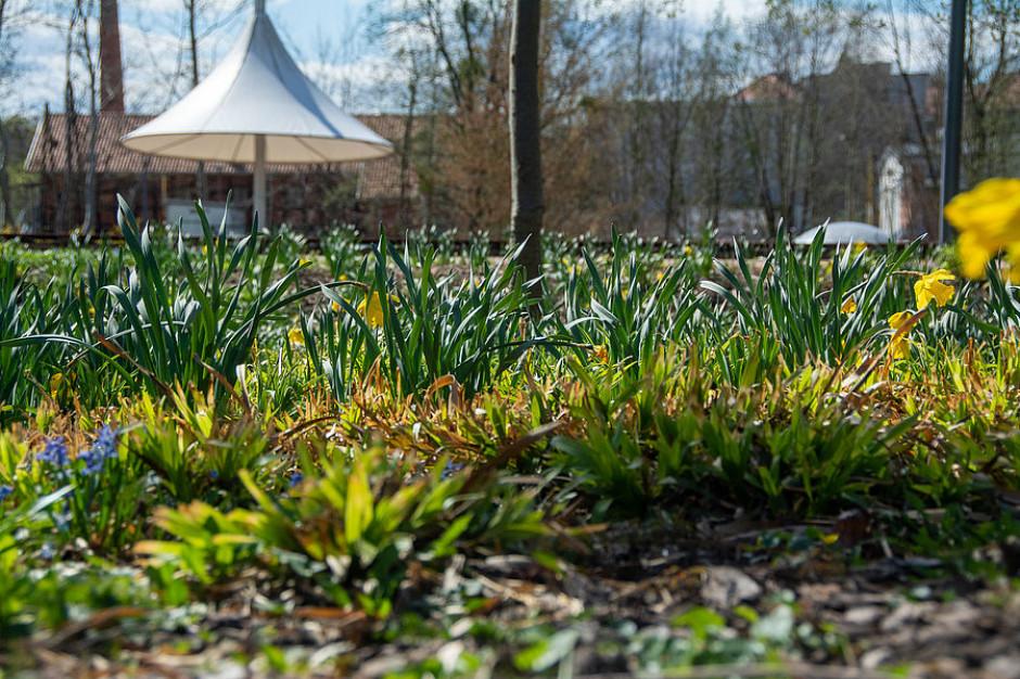 Olsztyn: W mieście będzie 7,6 tys. mkw. łąk kwietnych
