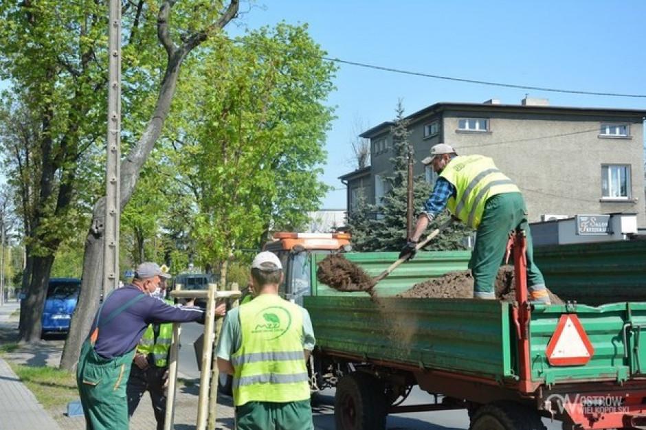 Ostrów Wielkopolski: ruszyła akcja sadzenia drzew