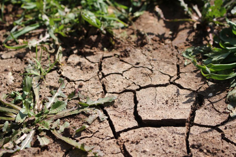 Polsce grozi największa susza w dotychczasowej historii pomiarów