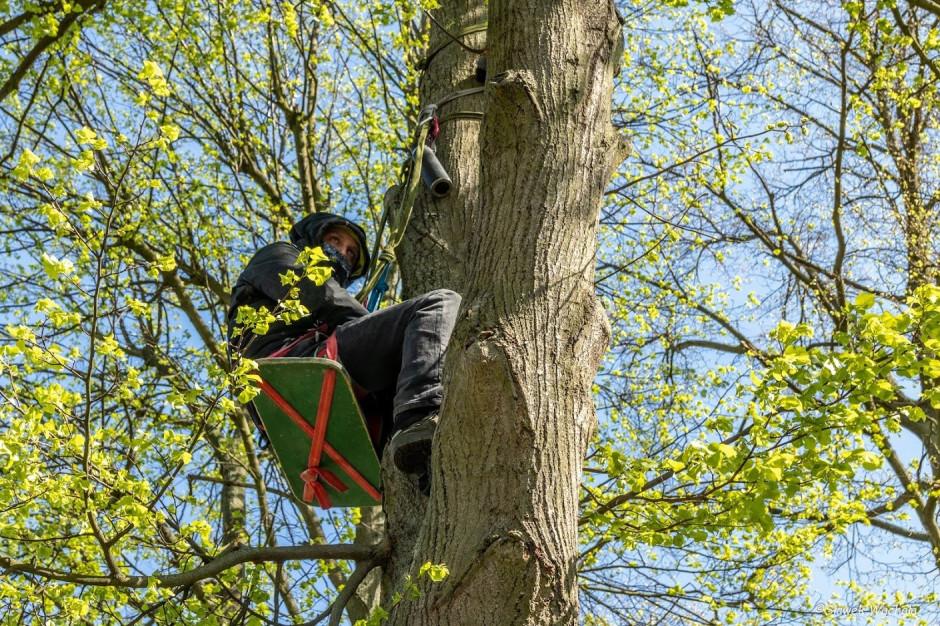 Aktywiści okupowali drzewa. Nie zgadzają się na ich wycinkę
