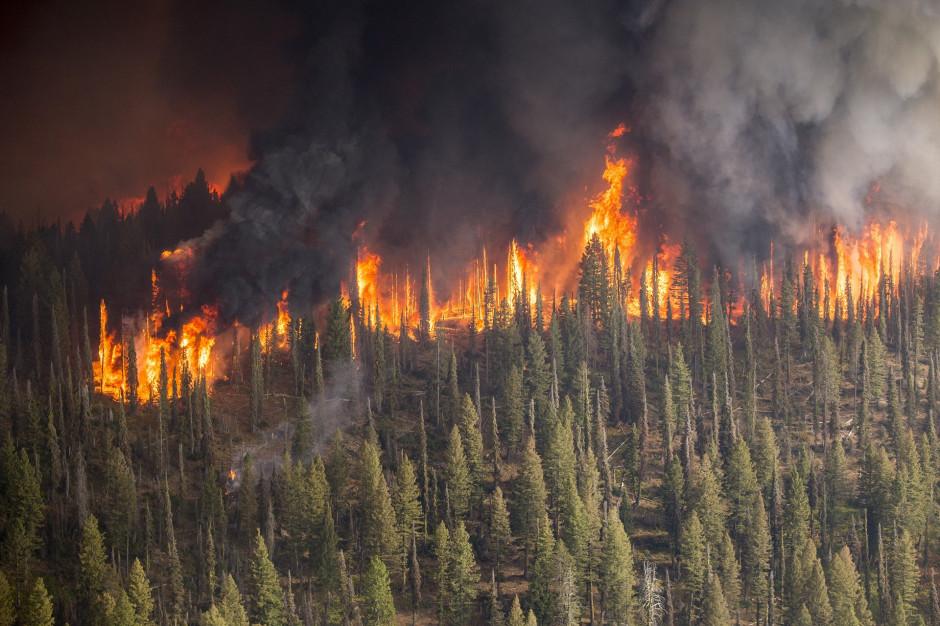 Blisko 240 pożarów w ciągu jednego dnia
