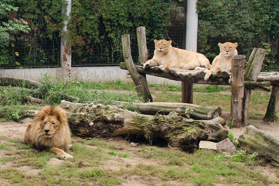 Płock: Zoo ponownie otwarte