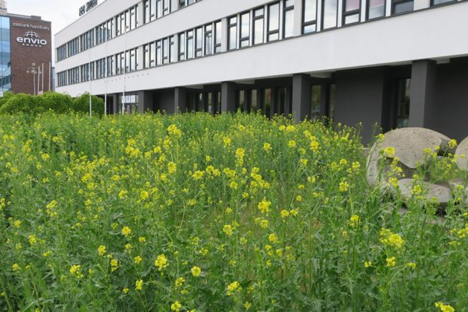 Bydgoszcz: z powodu suszy wstrzymano koszenie miejskich łąk i trawników