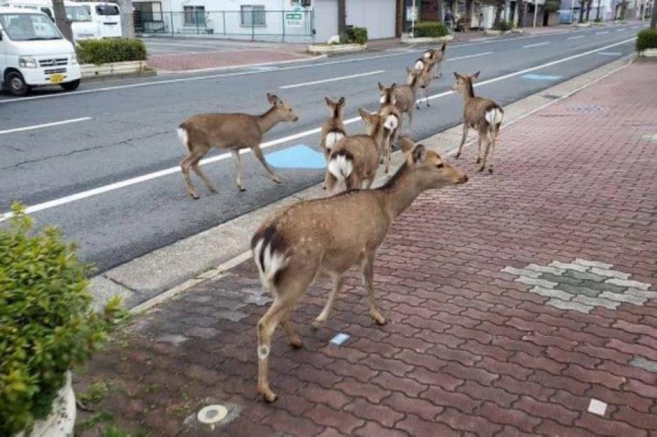 NIK o postępowaniu ze zwierzętami dzikimi na terenie miast