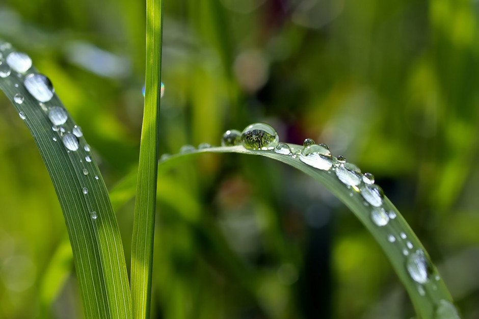 Mikołów dofinansuje mieszkańcom zbieranie deszczówki