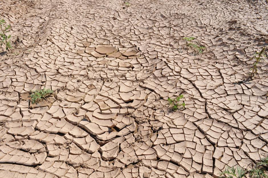 Tak wielkiej suszy jak prognozowano nie będzie?