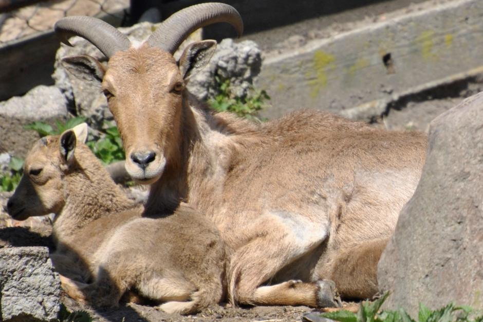 Ogród zoobotaniczny w Toruniu ponownie otwarty od poniedziałku