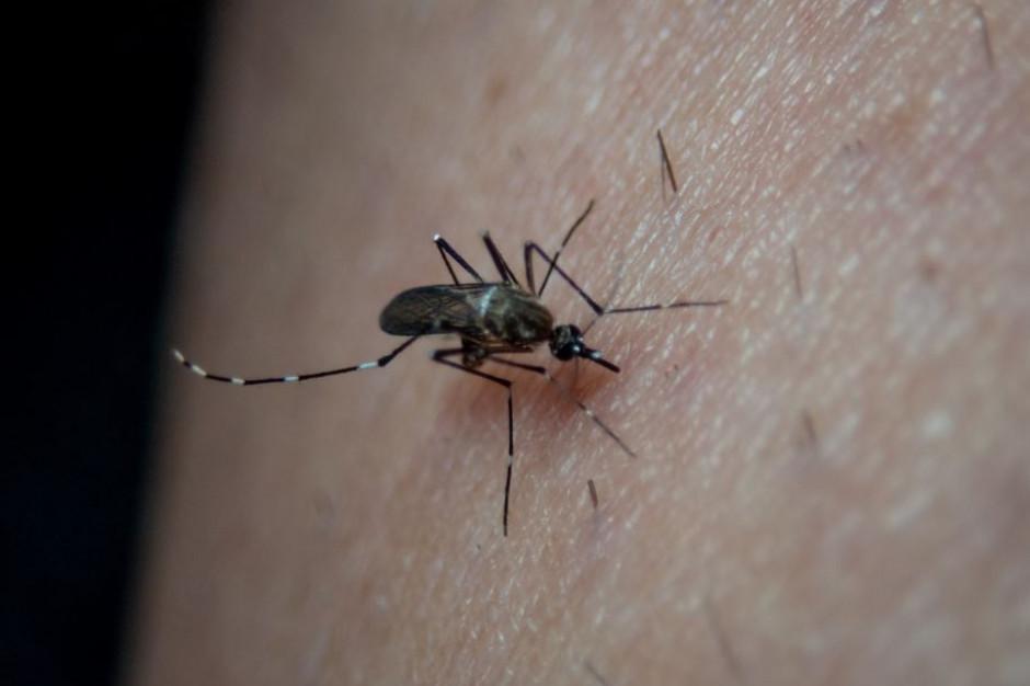 Samorząd zwalcza insekty. Przyrodnicy ostrzegają