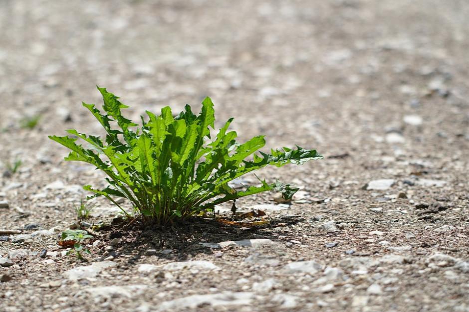 Jak zapobiegać skutkom suszy? Oto poradnik dla gmin i mieszkańców