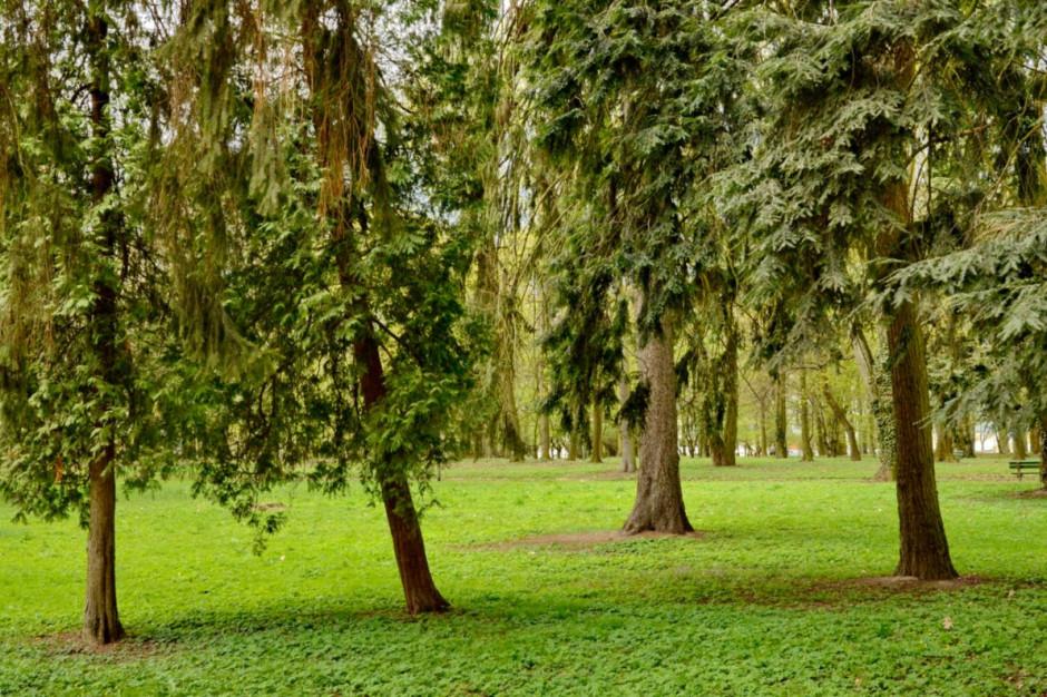 Gorzów Wielkopolski: Park Kopernika zostanie zrewitalizowany