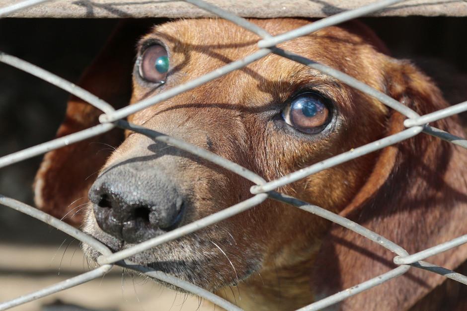 Warszawa: Schronisko Na Paluchu przyjmie 100 bezdomnych psów ze schroniska w Radysach