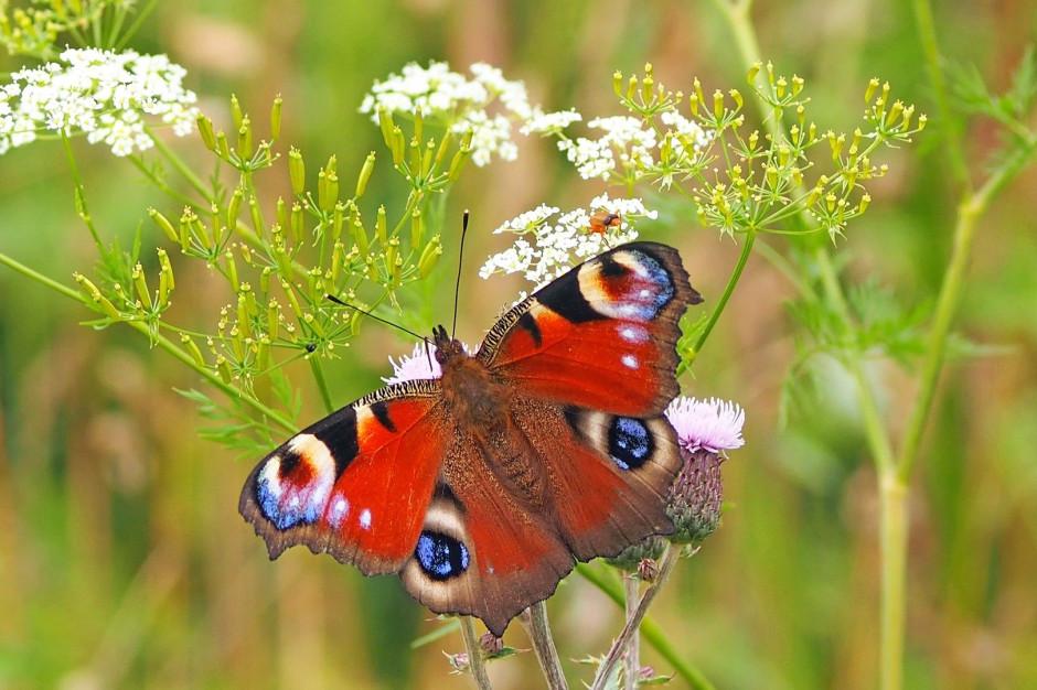 W Katowicach powstanie osiedle dla motyli