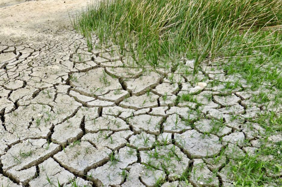 IUNG: obszar suszy coraz mniejszy