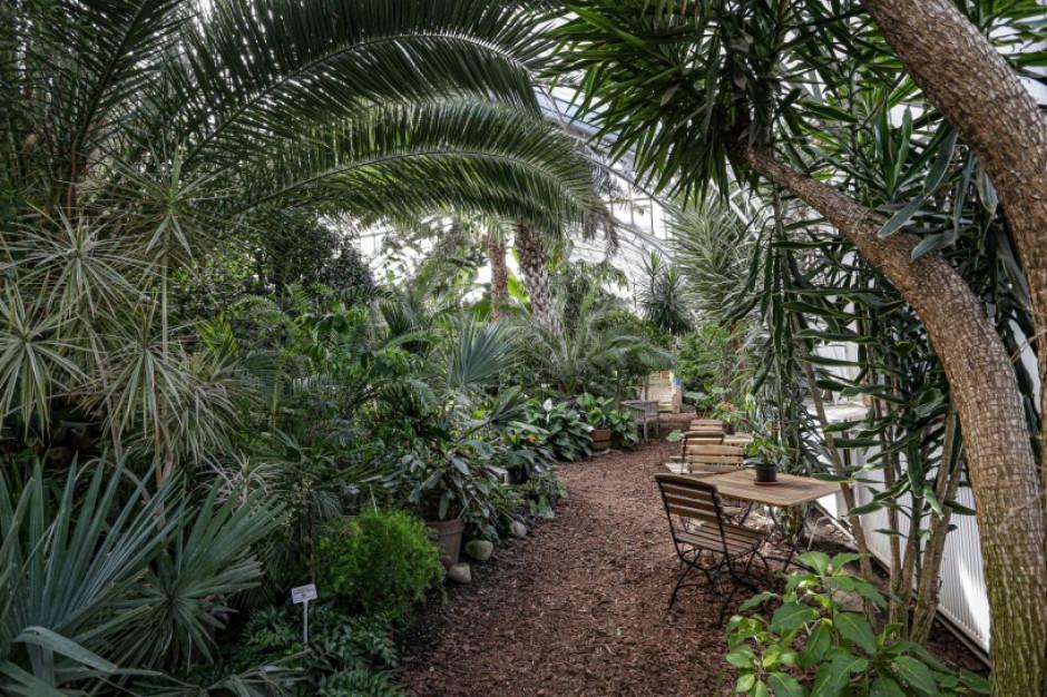 Legnicka palmiarnia będzie jak nowa