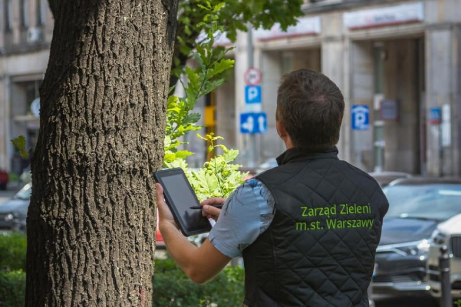 Warszawa inwentaryzuje drzewa. Dla dobra drzew i mieszkańców