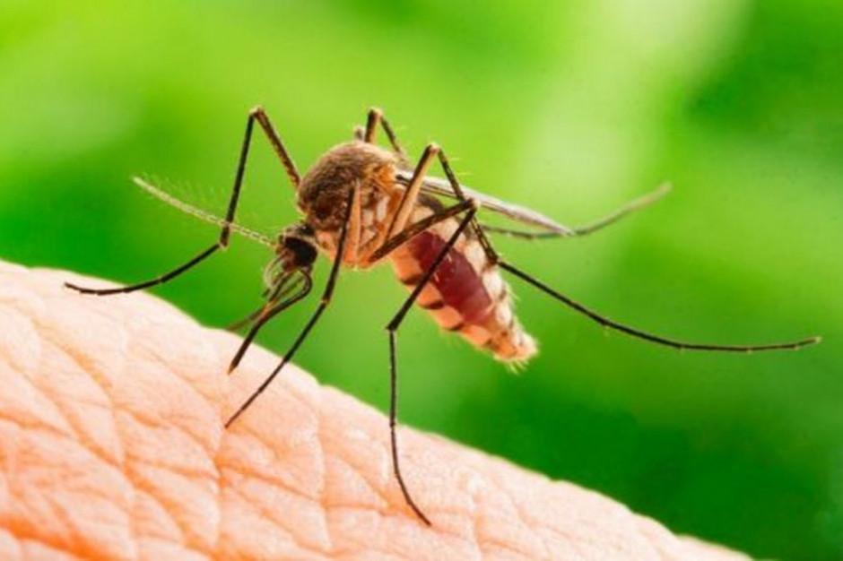 Komary atakują. Miasto zapowiada działania