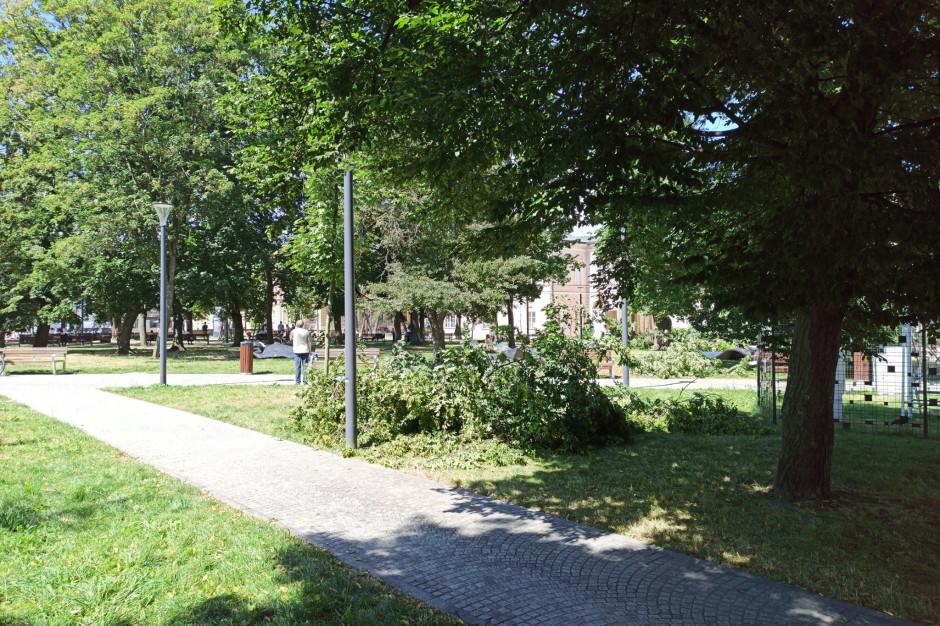Lublin: 100 drzew zniszczonych przez nawałnicę