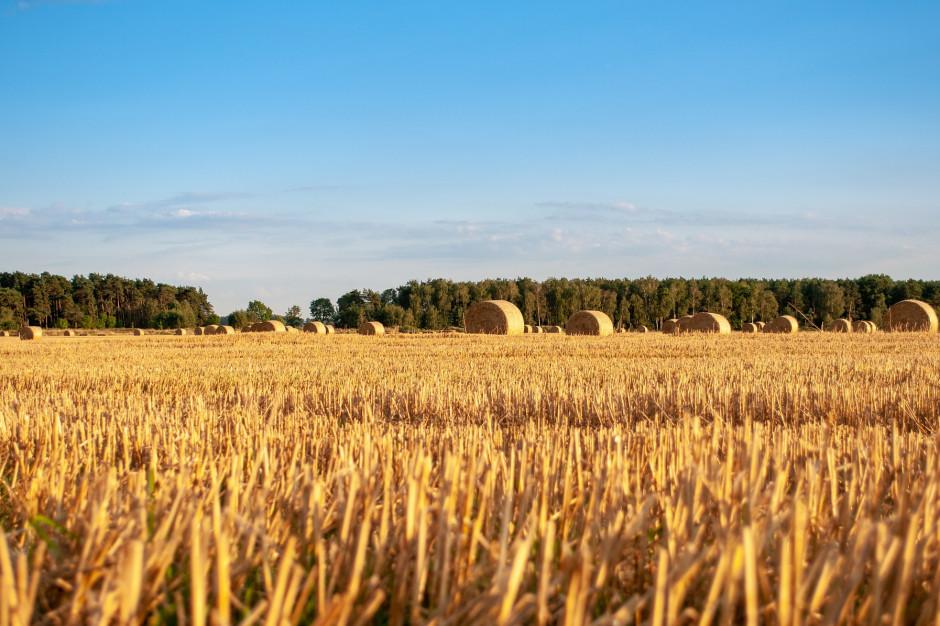 Rolnicy poszkodowani przez suszę i koronawirus mogą wnioskować o wsparcie