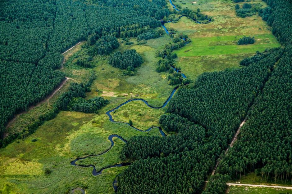 Zagrożenie pożarowe w większości lasów polskich