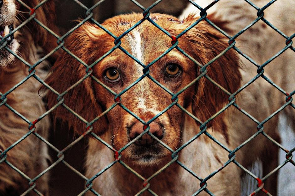 Trwają prace nad nowymi przepisami o schroniskach dla zwierząt