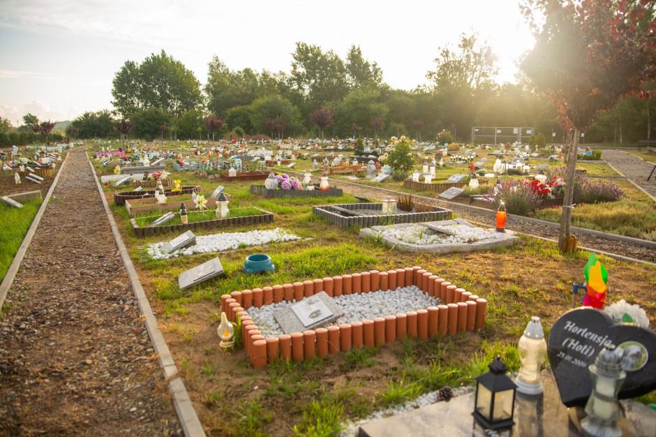 Cmentarz dla zwierząt w Świnoujściu. Miasto szuka dzierżawcy i zarządcy