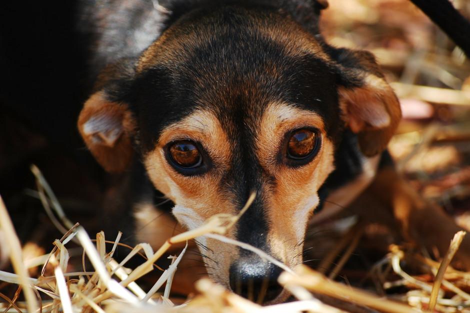 Otwarte Klatki chwalą projekt PiS w sprawie zwierząt