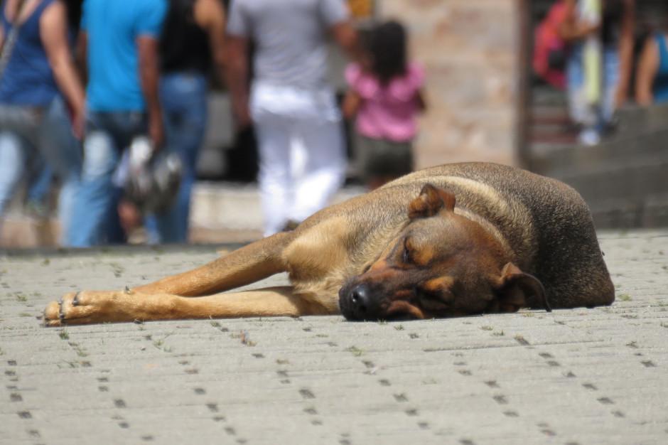 Müller: kwestia ochrony zwierząt powinna być wreszcie uregulowana