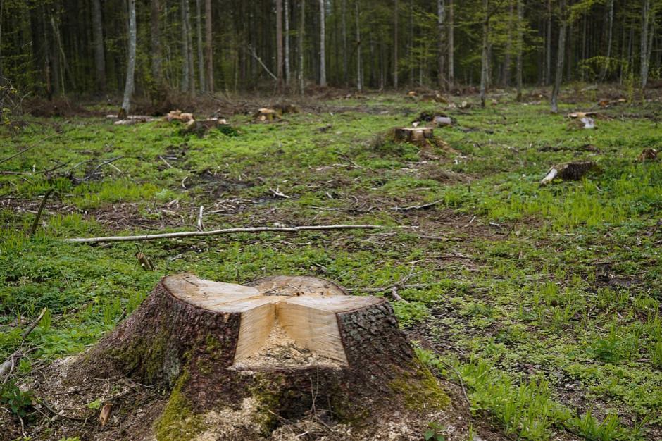 Deweloper chce budować domy w Lesie Bemowskim. Wójt zawiadamia prokuraturę