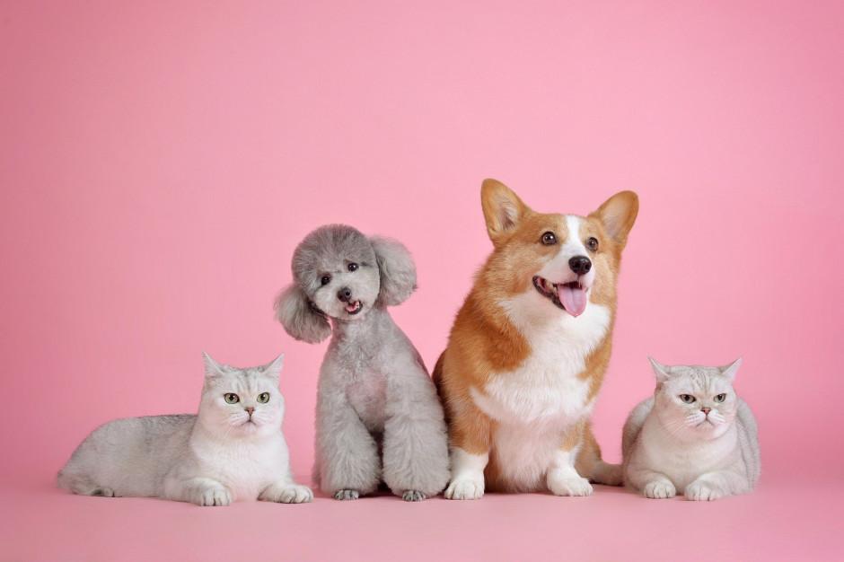 Powstanie baza zaczipowanych zwierząt