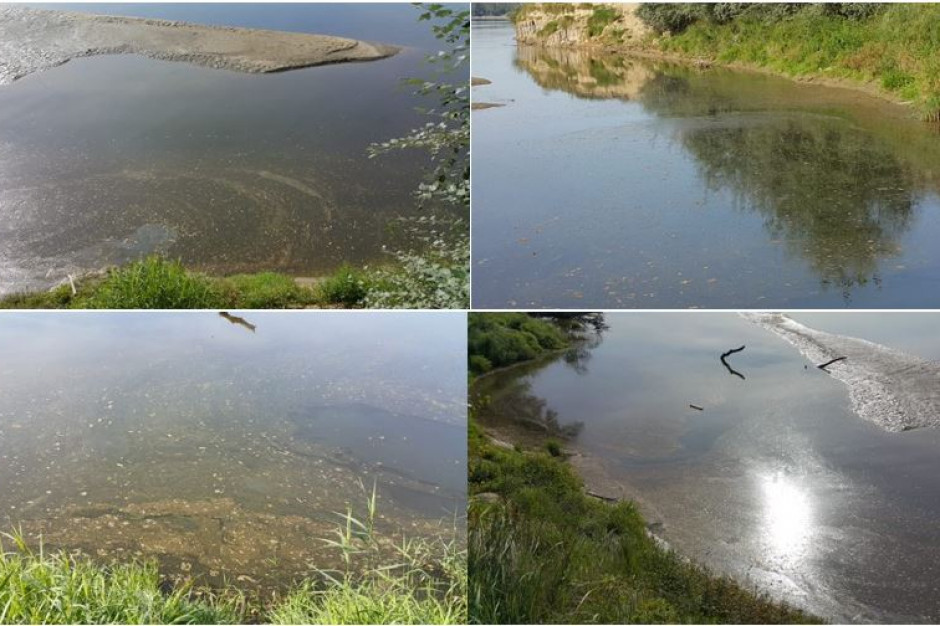 Wody Polskie: Do Wisły trafiło 300 ton azotu i 30 ton fosforu