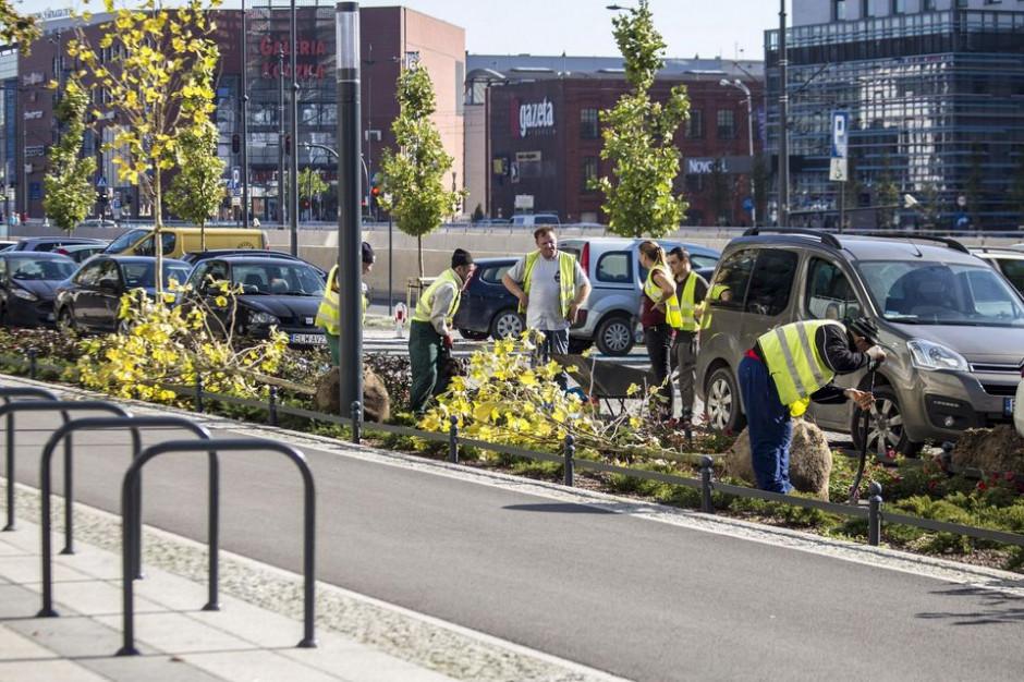 W Łodzi do końca roku pojawi się ok. 2 tys. nowych drzew