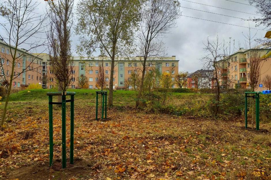 Zielone inwestycje w Szczecinie: dwie łąki kwietne i setki drzew