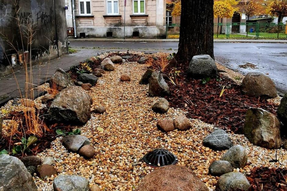 W Kaliszu powstaje pierwszy ogród deszczowy