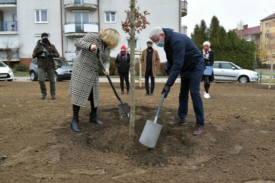 W Poznaniu pierwsze drzewa za wyborczą frekwencję ozdobiły zwycięskie osiedla