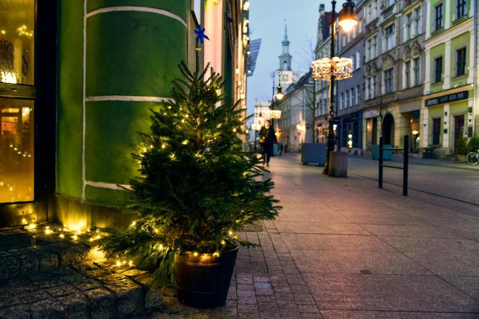 Poznań: Około 200 choinek ozdobiło ulice miasta