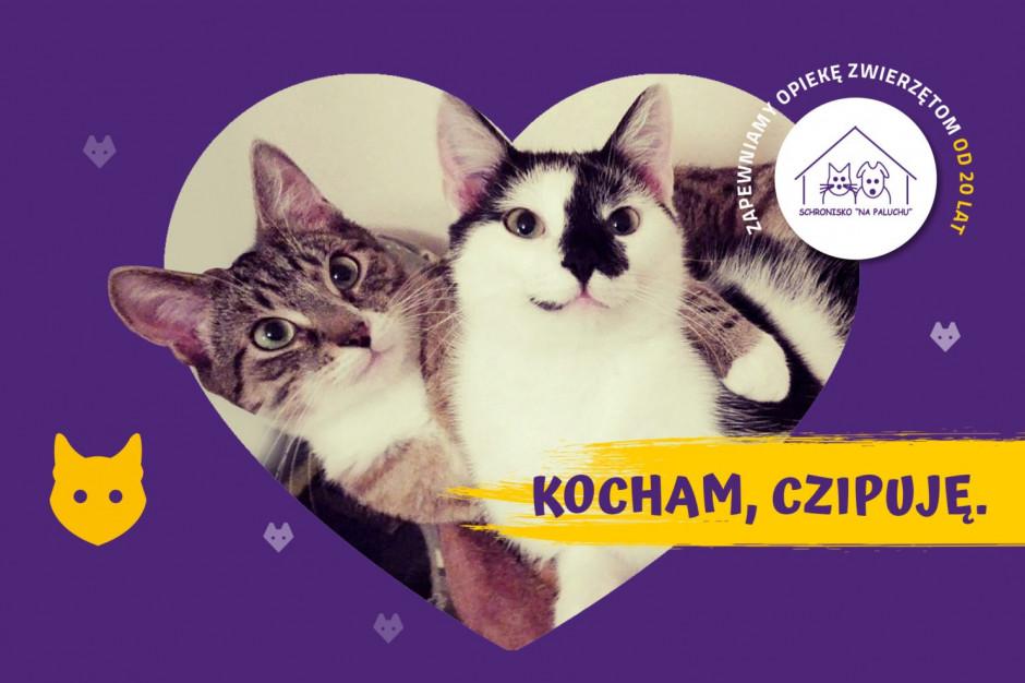 Darmowe czipowanie kotów w Warszawie
