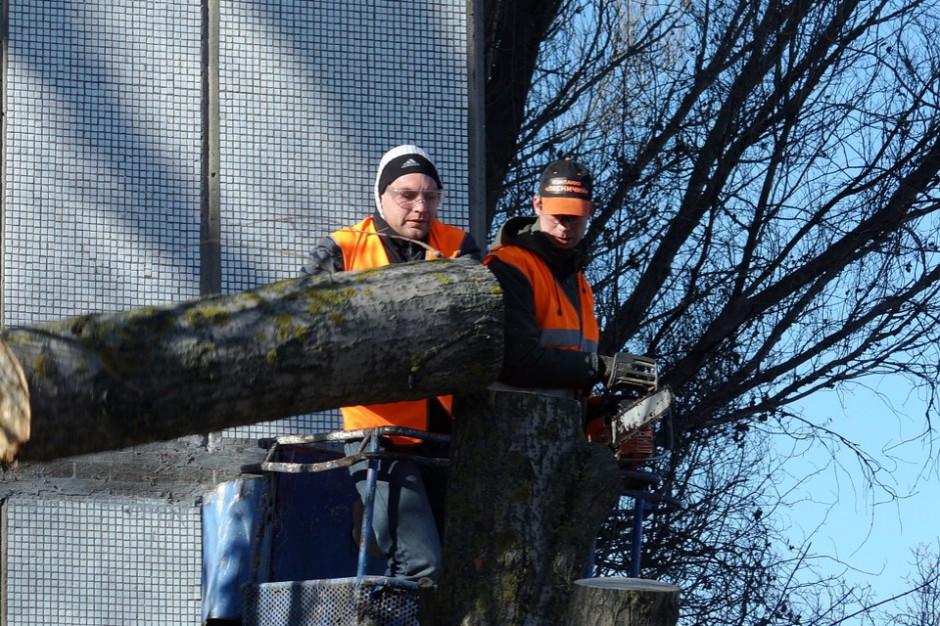 Podejrzana wycinka drzew w Gdańsku. Kara może wynieść 75 tys. zł