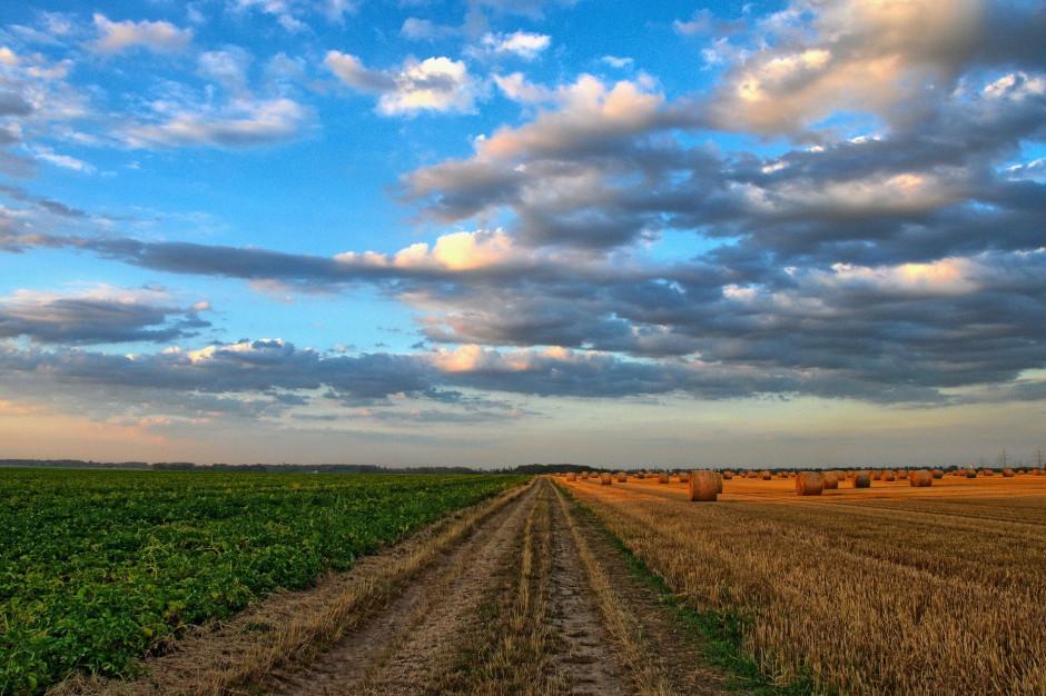 Apelują by przeznaczyć więcej środków z KPO na obszary wiejskie