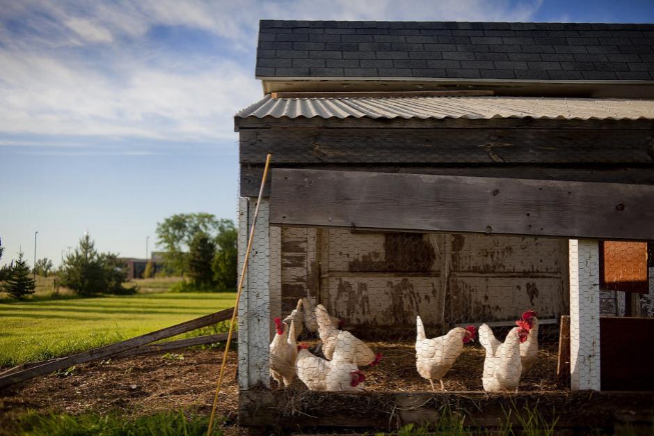 Wirus wysoce zjadliwej ptasiej grypy na Mazowszu. Wojewoda apeluje do samorządowców