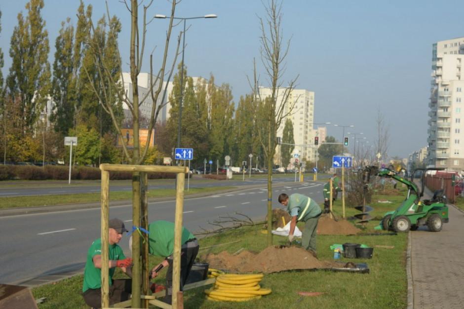 Naukowcy wyliczyli wartość pracy drzew w Warszawie. To minimum 170 mln zł rocznie