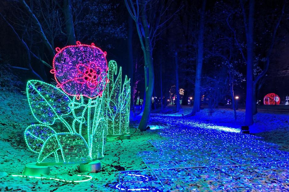 Ogród dendrologiczny stanie się magicznym lasem